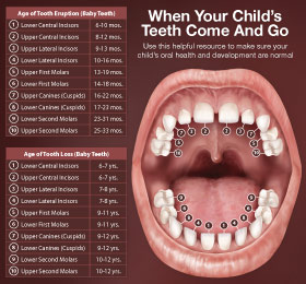 Anatomy of a childrens mouth and teeth.