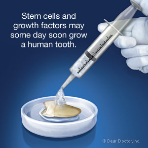 Stem cells may some day soon grow a human tooth.