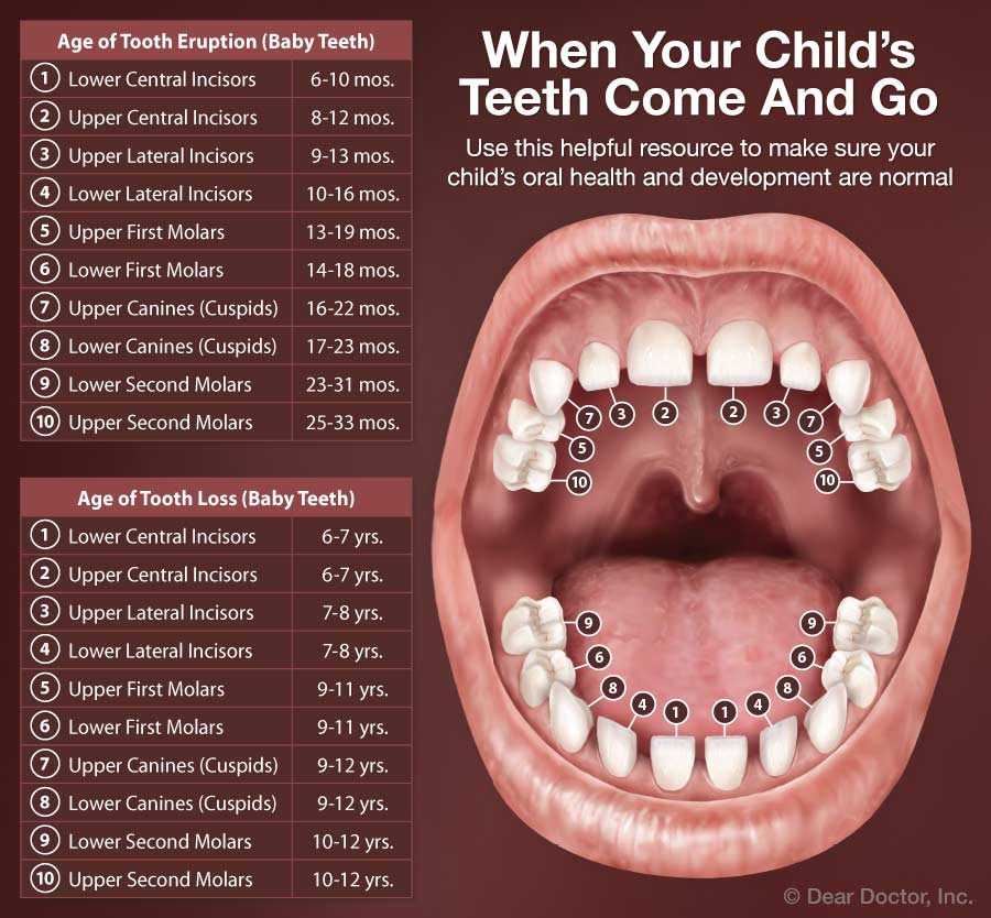 When Your Child's Teeth Come And Go.