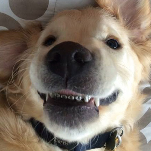 Pup Gets Braces - And it's a Dog-Gone Good Thing!