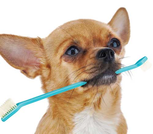 Go Fetch — a Pet Toothbrush!