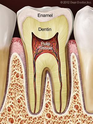 Image showing the composition of a healthy tooth.